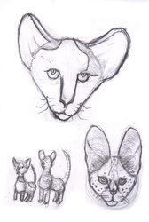 Cats with Large Ears
