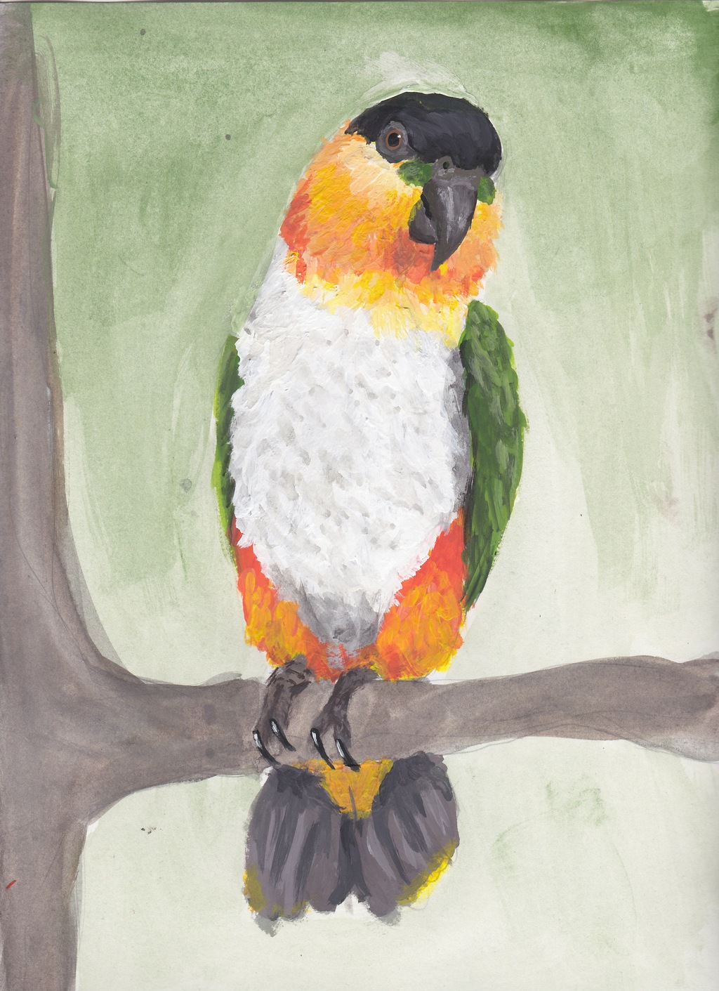 Caique finished~
