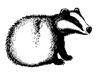 Badgerball