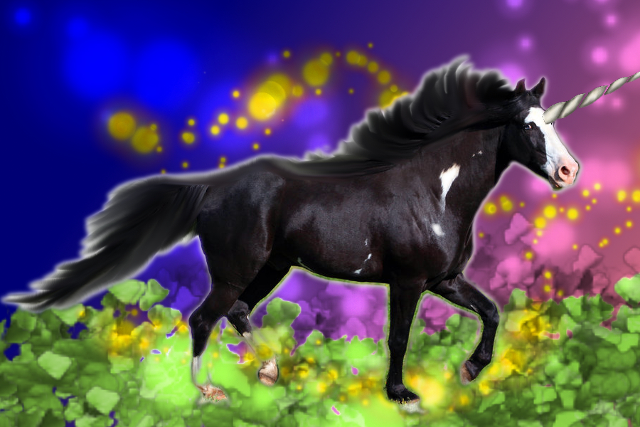 Most recent image: Black Beauty