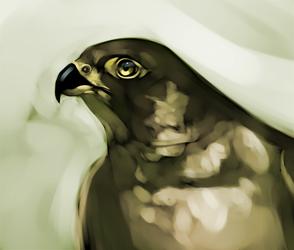 falcon - speedpaint - 35min