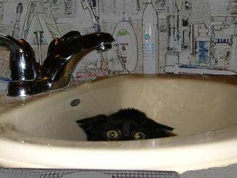 Sink kitteh will get joo!