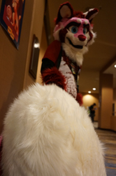 Tail so big