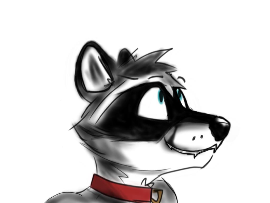 Most recent image: Raccoon