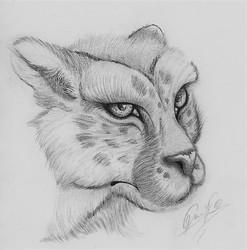 Cheetah Bust