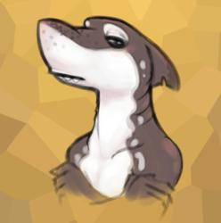 Sharko Doodle
