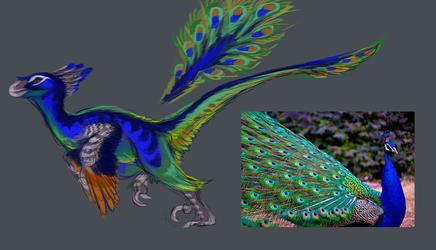 .Peacock Raptor Design.