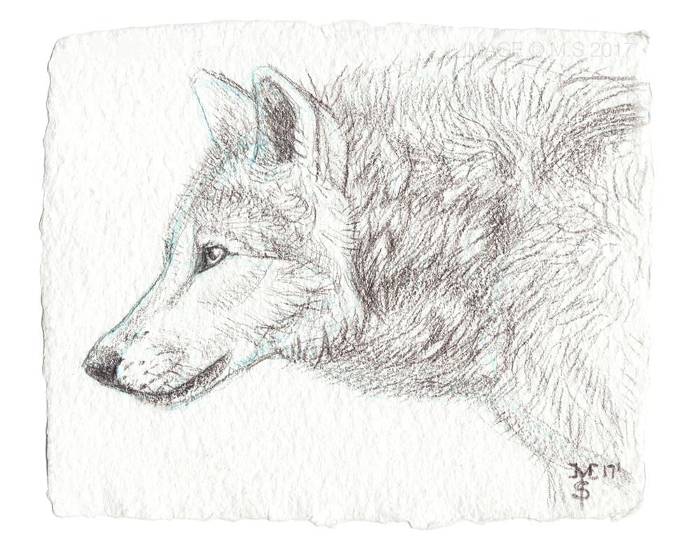 Serene Wolf