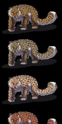 Felis Pardus - Amur Leopards
