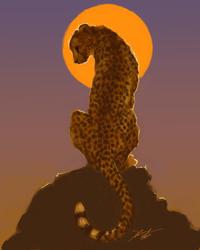 Sunset Cheetah SP