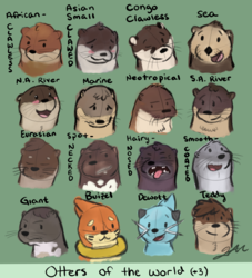 Otters of the World (+3)