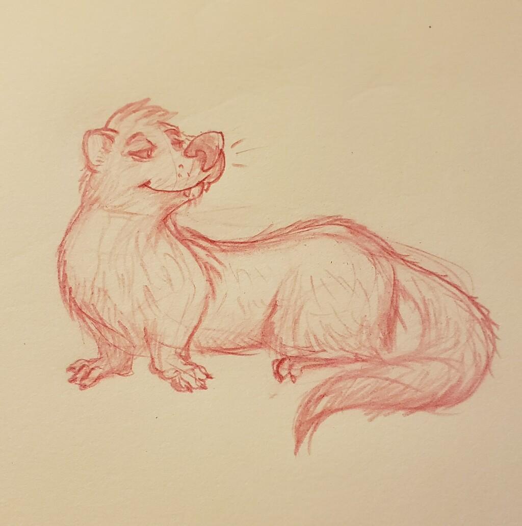 Most recent image: An Mink