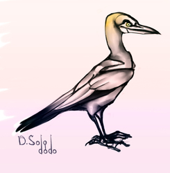 Gannet bird practice