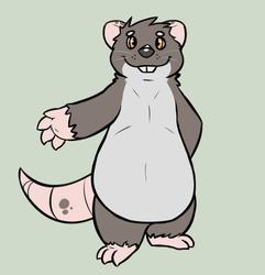 Tobi - Rat