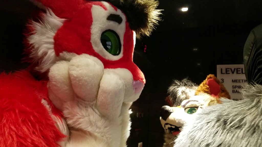 Anthrocon 2019 - Kitkat - 66