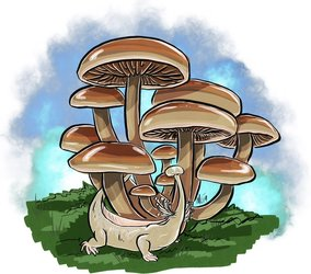 Mayshroom Enokitake
