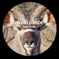 Worldwide [Kare Remix]