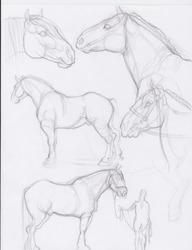 Percheron Prep Sketches