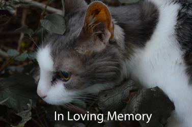 In Loving Memory of Mr. Phobos