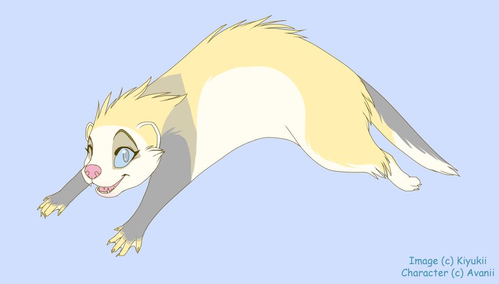 Lin the Ferret