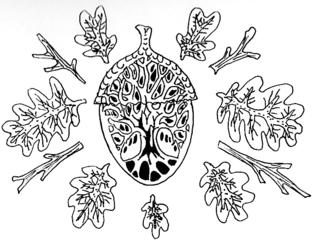 Oak in acorn