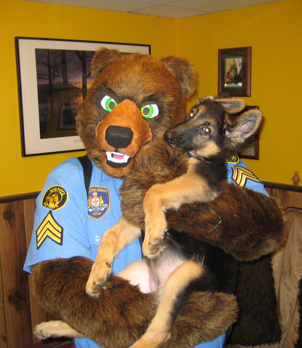 Sergeant Bear and the Rookie