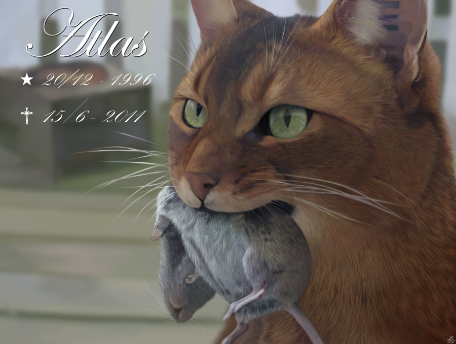 In memory of Atlas