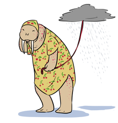 Random Walrus