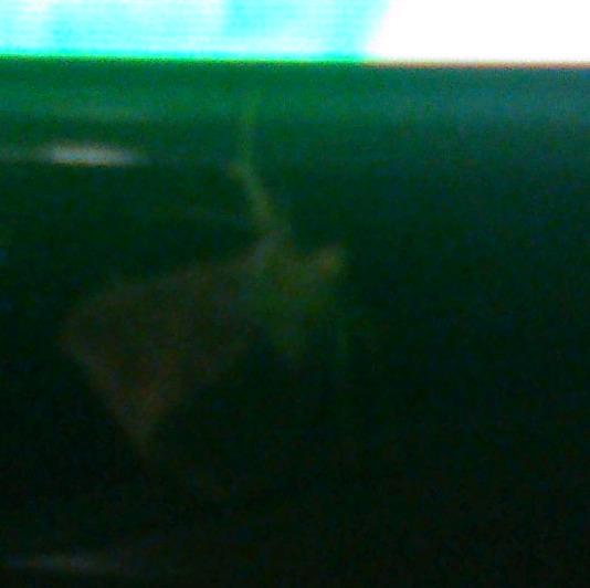 Flutter The Moth [2 of 2]