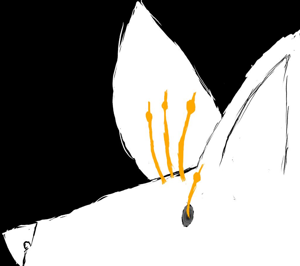Most recent image: Cordyceps Ache