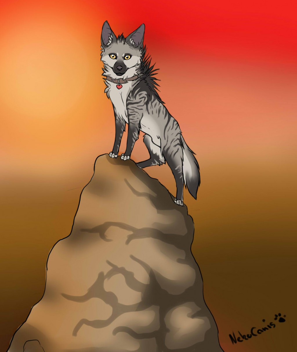The aardwolf on a termite hill