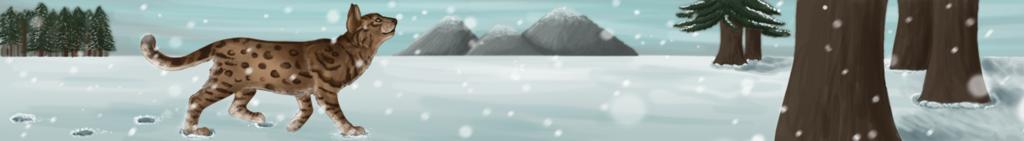 C: Winter Banner