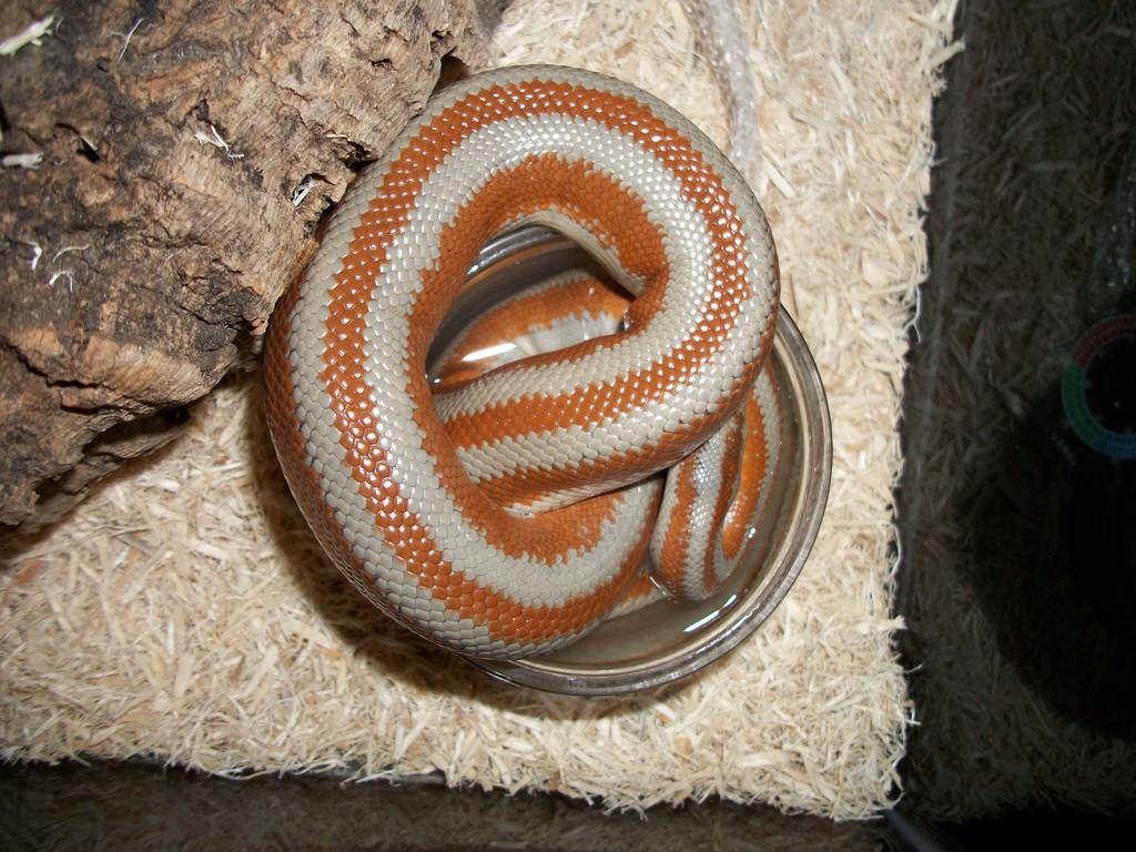Snake Water