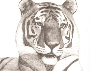 Tiger Value