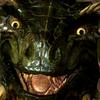 Avatar for Komodo