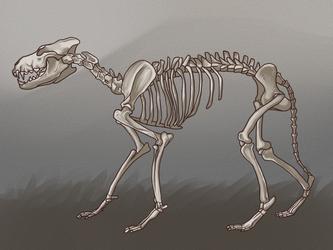Skeleton Practice