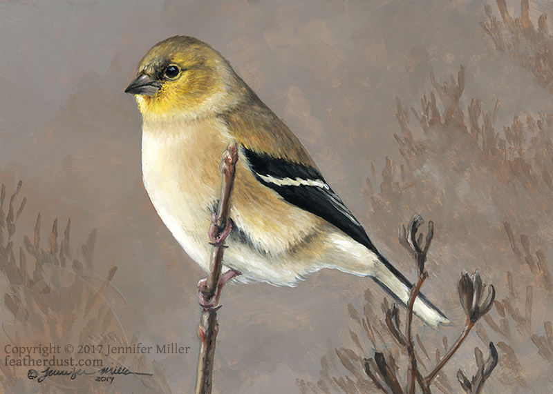 Most recent image: Winter Goldfinch