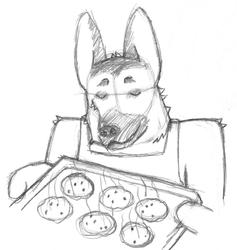 Baking German Shepard