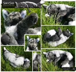SheeSha, the silver-fox plush