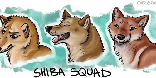 Shiba Squad