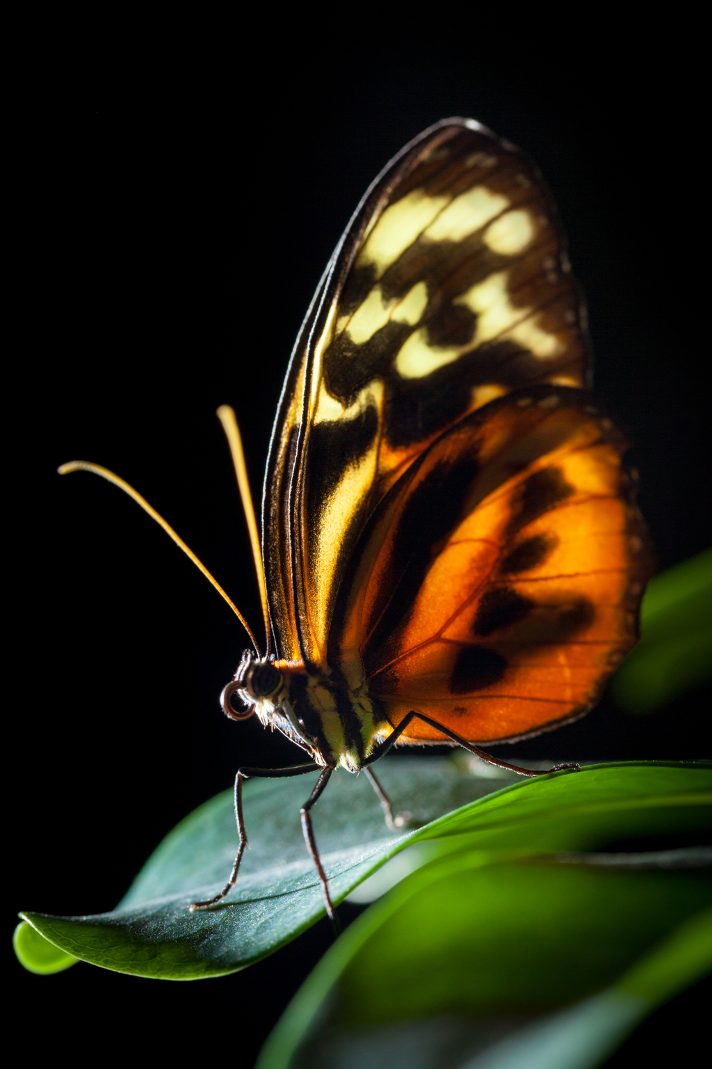 Most recent image: Atomic Butterfly
