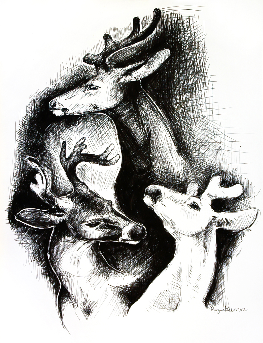 deer sketches