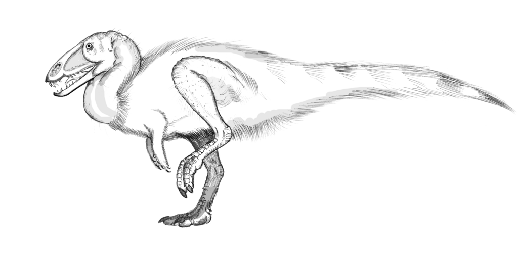 Most recent image: Coelophysis