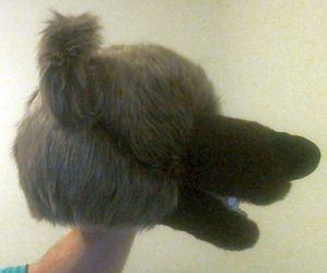 Bear Puppet 03/13/15 #2