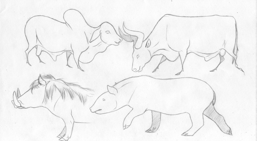 animal sketches 3