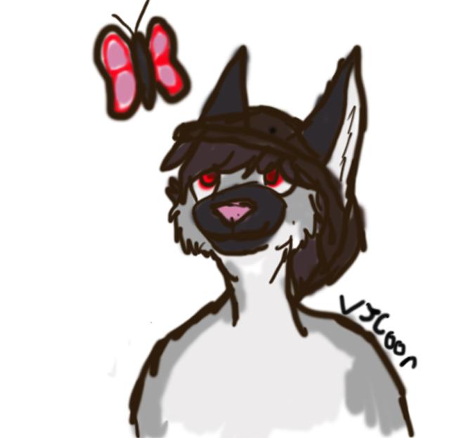 oo butterfly