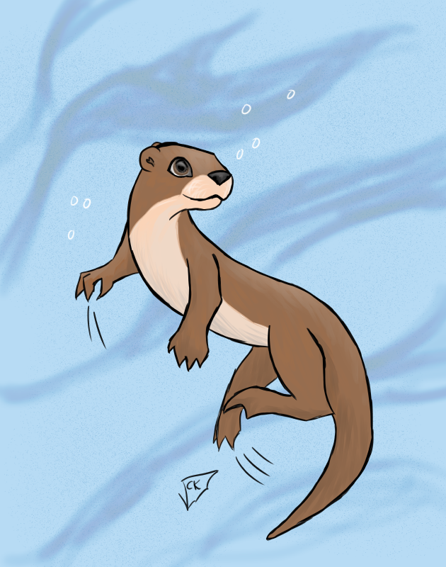 Otter swimming