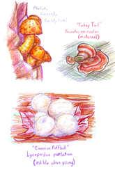 Mushroom Species 1