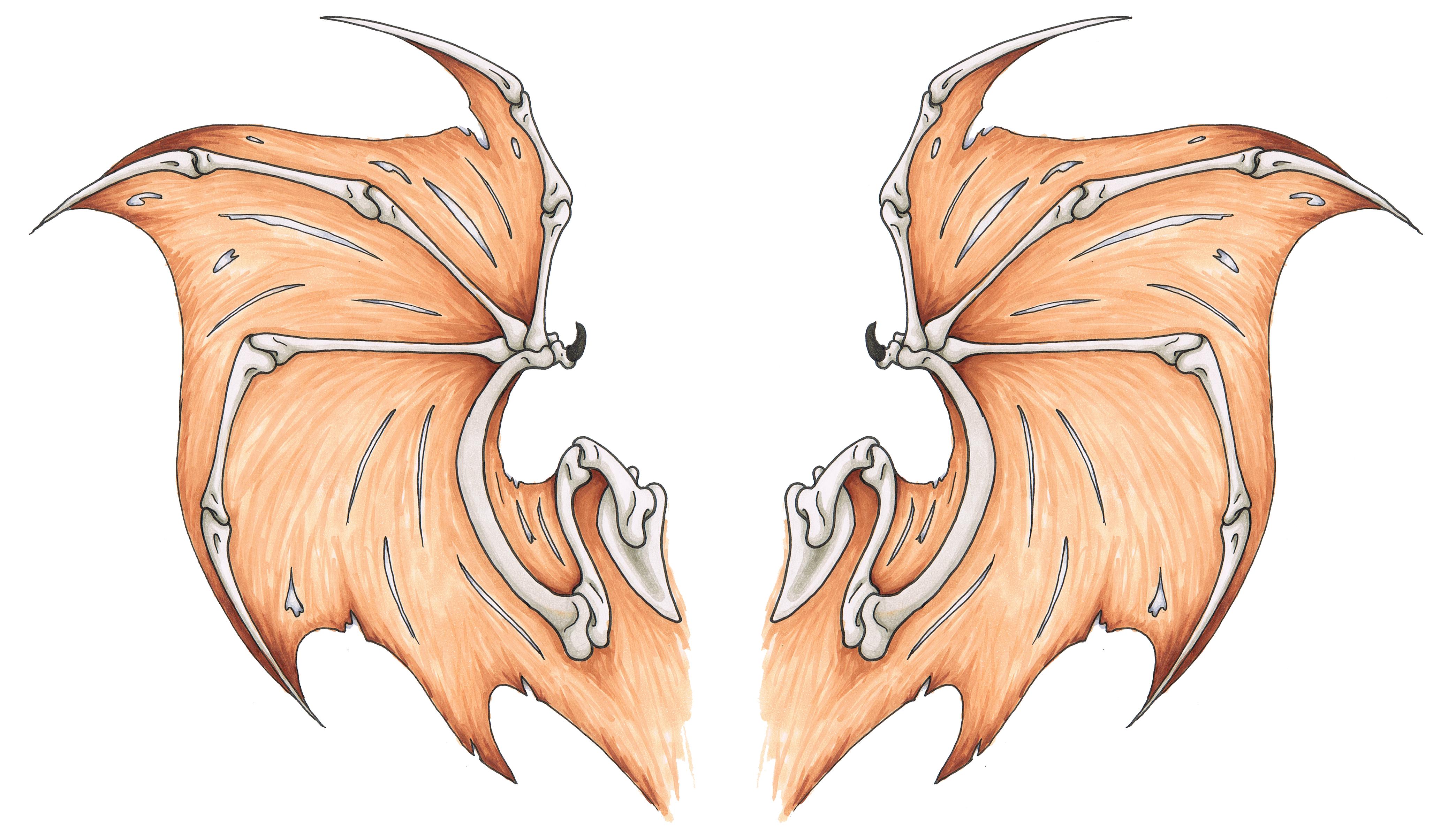 Wing tattoo design - Bat Wings Tattoo Design