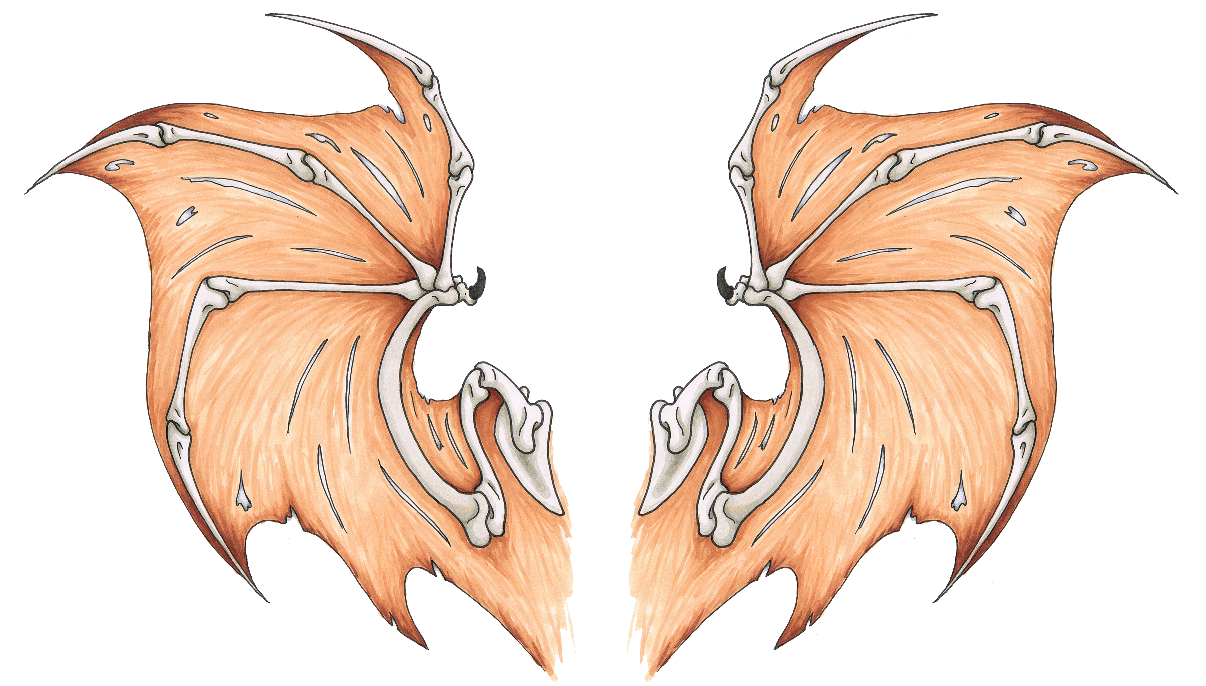 Bat Wings Tattoo Design Weasyl